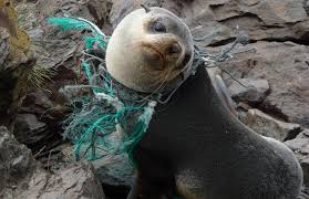Atrapamiento con plastico