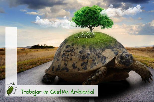 AVANZANDO A TODA MECHA… PERO NO EN CUESTIONES AMBIENTALES (DMMA2019)